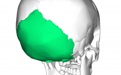 A Nod To The Occipital Bone And Your Health