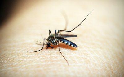 Vitamin B1 for Bug Repellent